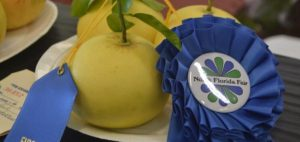 Blue ribbon winner at the North Florida Fair