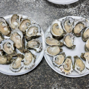 Shell Oyster Bar oysters